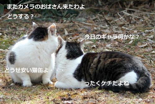 ネコと動物愛護チャリティーカレンダー2011-11月