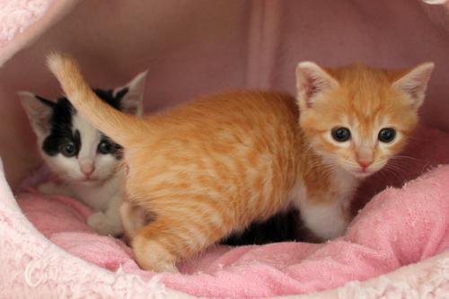 保健所からレスキューされた子猫(1)