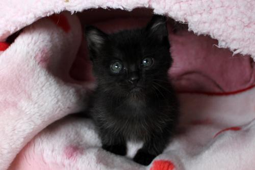 保健所からレスキューされた子猫(2)