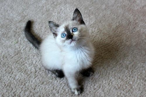 保健所からレスキューされた子猫(5)