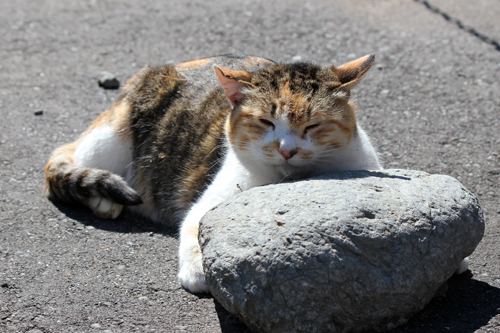 10月 地域猫3