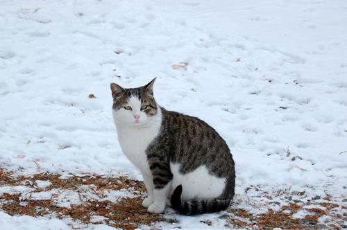 地域猫2月