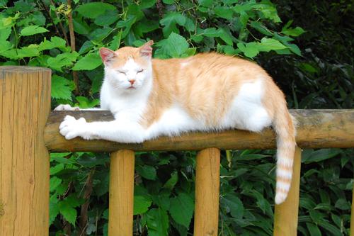 8月 地域猫
