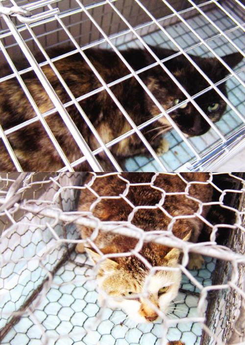 地域猫のTVR活動