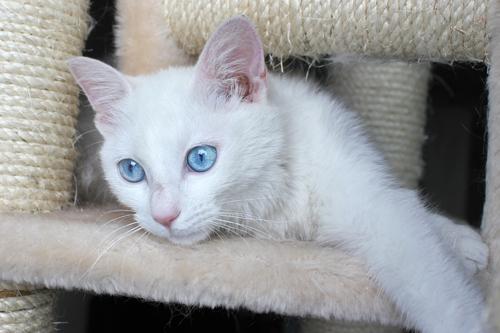 ネコと動物愛護チャリティーカレンダー2012 5月