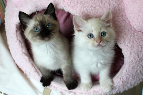 ネコと動物愛護チャリティーカレンダー2012 1月