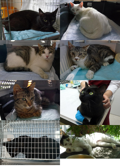 TNRと保護の猫さんたち