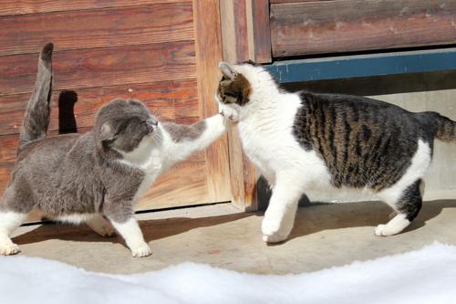 ネコと動物愛護チャリティーカレンダー2013 1月