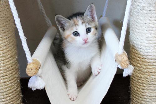ネコと動物愛護チャリティーカレンダー2013 10月