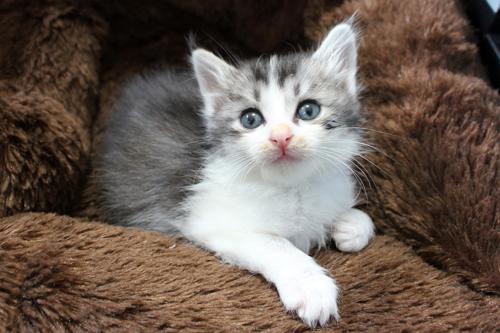 ネコと動物愛護チャリティーカレンダー2013 12月