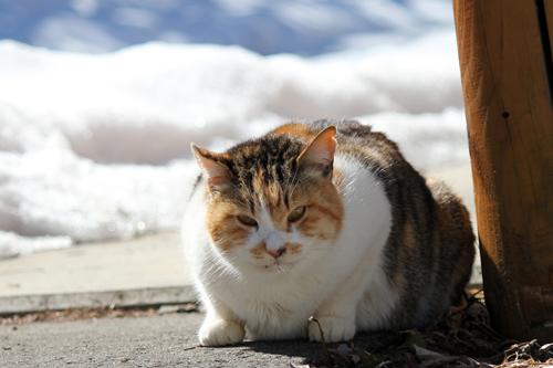 ネコと動物愛護チャリティーカレンダー2013 2月