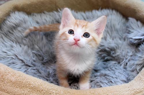 ネコと動物愛護チャリティーカレンダー2013 3月