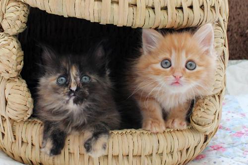 ネコと動物愛護チャリティーカレンダー2013 4月