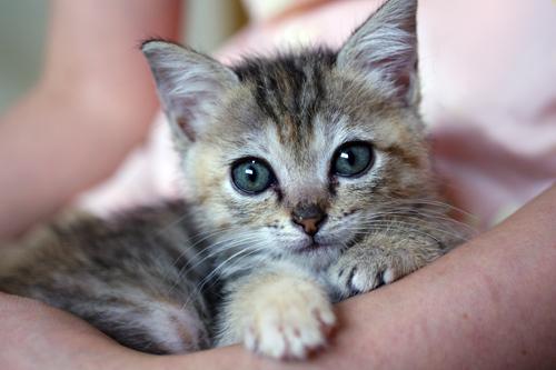 ネコと動物愛護チャリティーカレンダー2013 7月