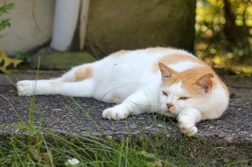 ネコと動物愛護チャリティーカレンダー2013 8月