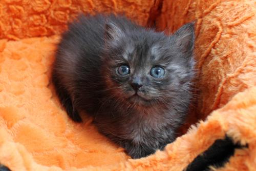 ネコと動物愛護チャリティーカレンダー2013 9月
