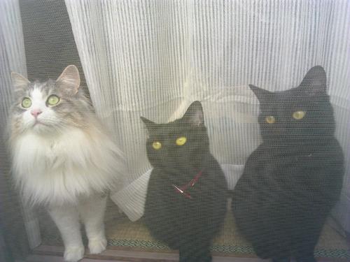居酒屋庄助さん's猫ちゃん