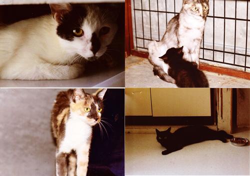 不妊化手術猫1