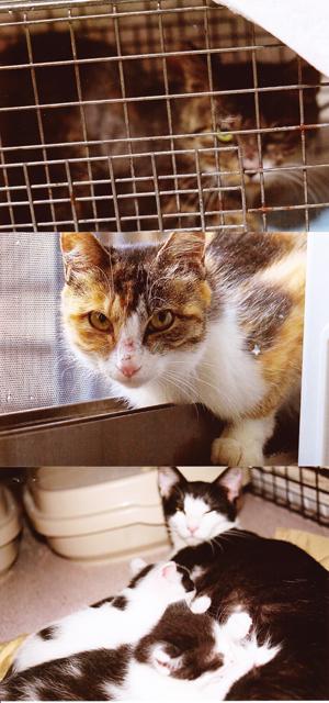 不妊化手術猫2