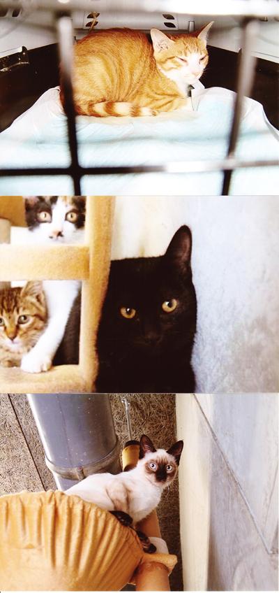保健所収容猫2