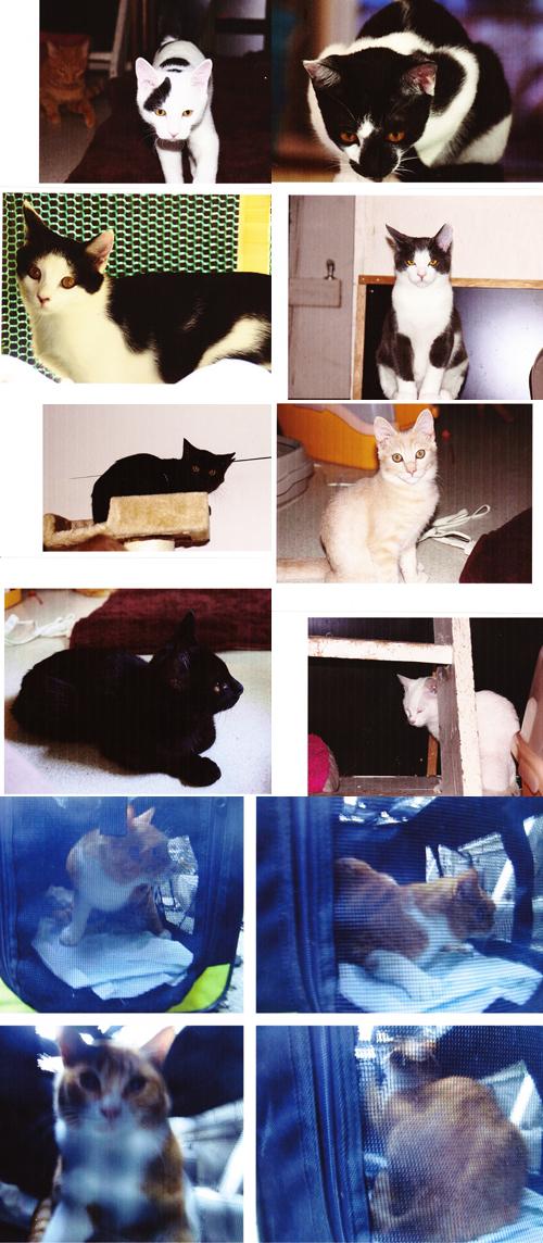 保健所レスキュー他猫たち写真