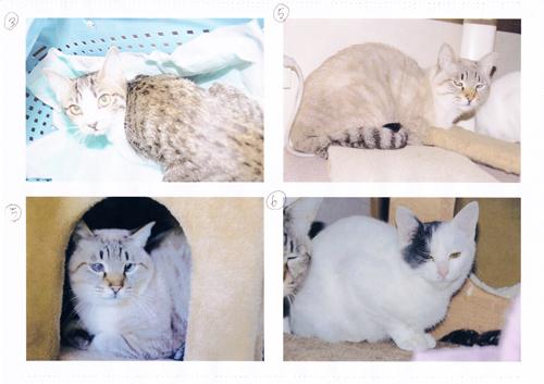 保健所から保護した猫2