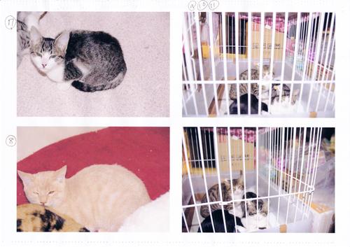 保健所から保護した猫3
