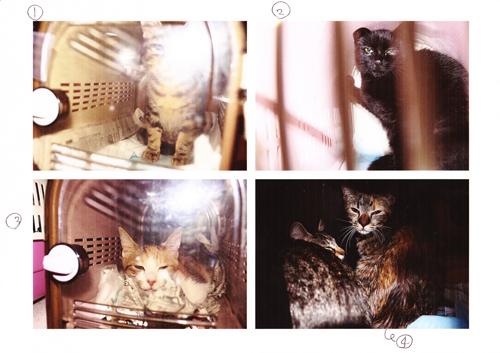 保健所から保護した猫5