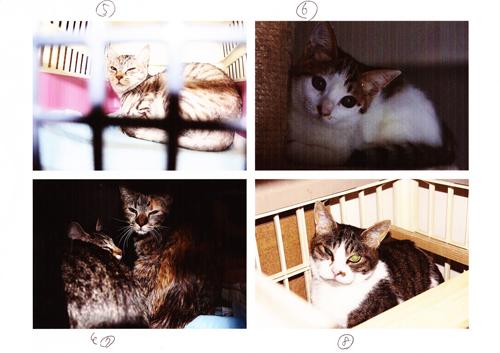 保健所から保護した猫6