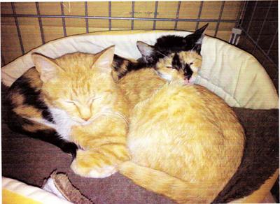 多頭飼い崩壊現場からの救済猫
