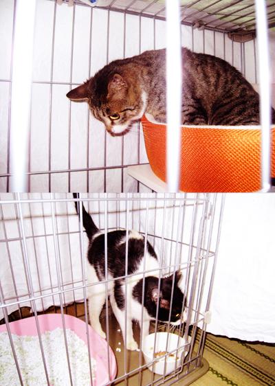 捨て猫救済