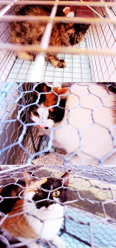 猫の不妊手術1