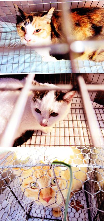 猫の不妊手術2