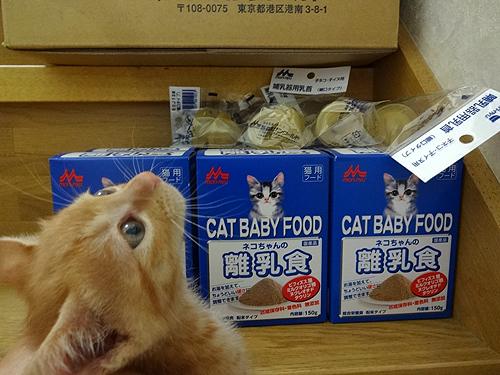 子猫とフード1