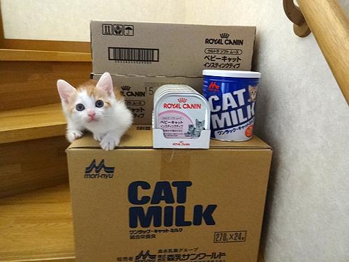子猫とフード2