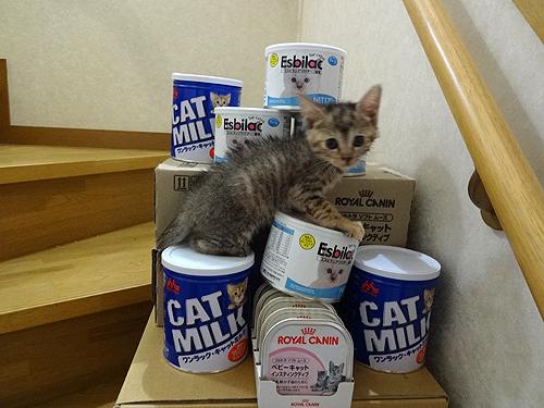 子猫とフード3