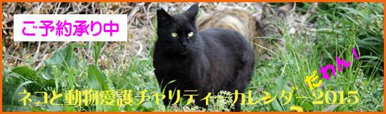 ネコと動物愛護チャリlてぃーカレンダー2015 ご予約承り中♪