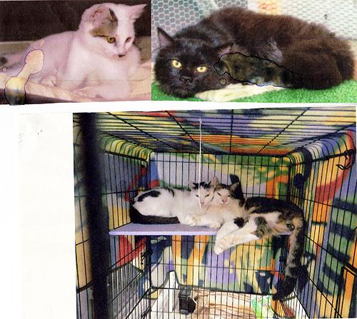 猫の不妊化手術2