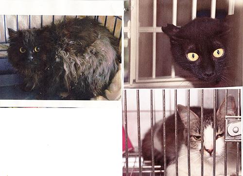 猫の不妊化手術5