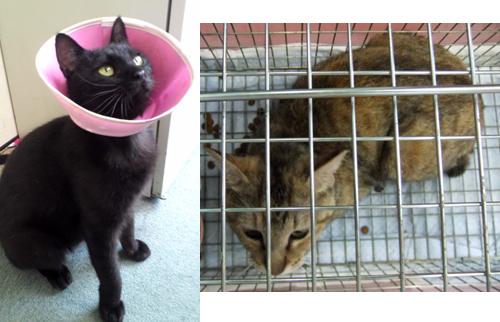 チャリティーカレンダー協力金申請猫写真