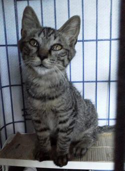 猫の保護と治療