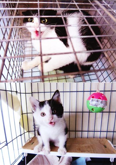 猫のTNRと保護猫治療