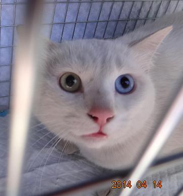 猫の不妊化手術