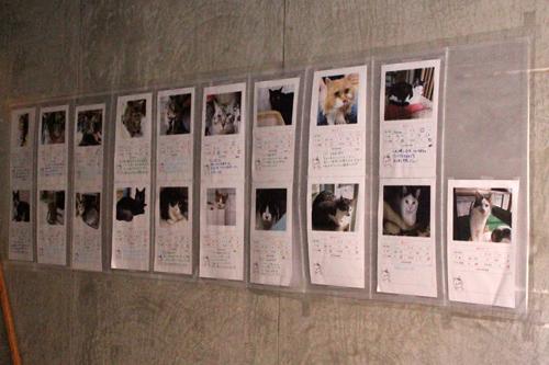 保護猫譲渡会、写真パネル