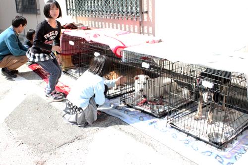 保護犬猫譲渡会、犬たち