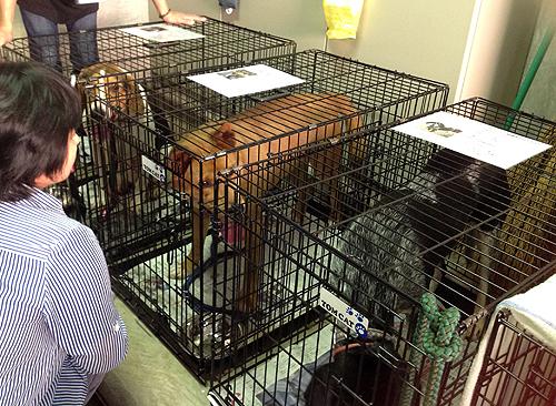 保護犬・猫譲渡会、犬たち