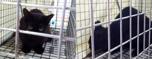 猫のTNR、不妊化手術