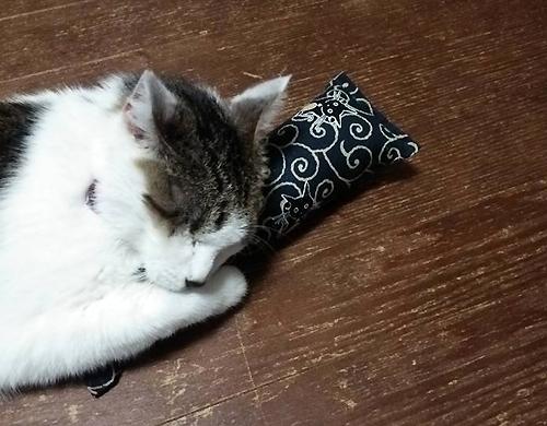 またたび入り手作りキッカーと猫ちゃん