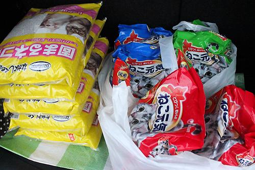 長野県松本市、多頭飼育崩壊30匹2-13-05