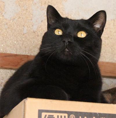猫の里親募集09
